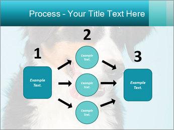 Berner sennen dog PowerPoint Template - Slide 92