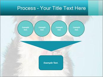 Berner sennen dog PowerPoint Template - Slide 93