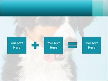 Berner sennen dog PowerPoint Template - Slide 95