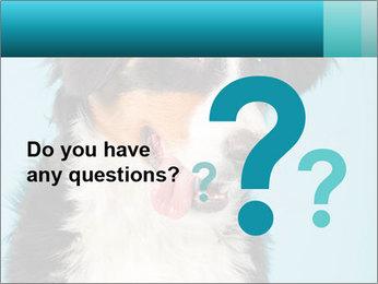 Berner sennen dog PowerPoint Template - Slide 96