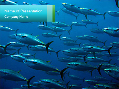 Group of giant tuna PowerPoint Template