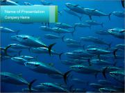 Group of giant tuna PowerPoint Templates