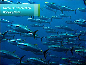 Group of giant tuna PowerPoint Template - Slide 1