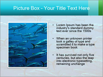 Group of giant tuna PowerPoint Template - Slide 13