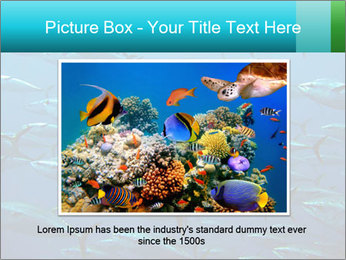Group of giant tuna PowerPoint Template - Slide 15