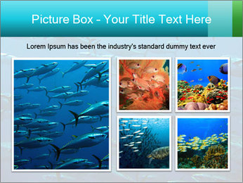 Group of giant tuna PowerPoint Template - Slide 19