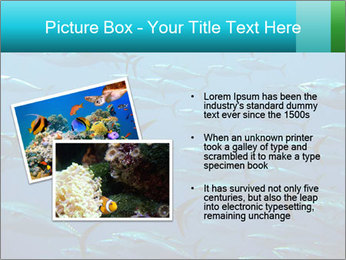 Group of giant tuna PowerPoint Template - Slide 20