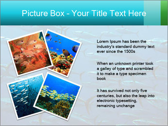 Group of giant tuna PowerPoint Template - Slide 23