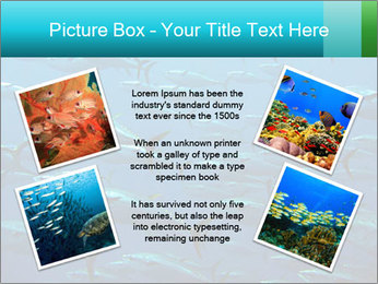 Group of giant tuna PowerPoint Template - Slide 24