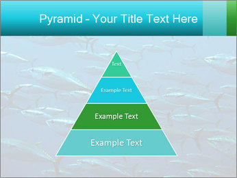 Group of giant tuna PowerPoint Template - Slide 30