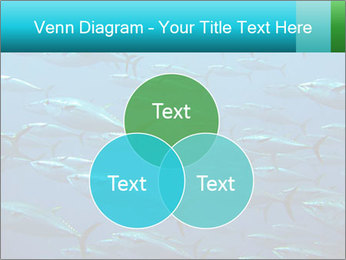 Group of giant tuna PowerPoint Template - Slide 33