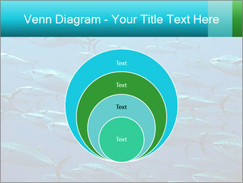 Group of giant tuna PowerPoint Template - Slide 34
