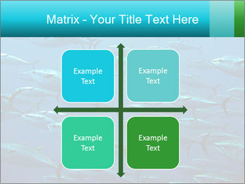 Group of giant tuna PowerPoint Template - Slide 37
