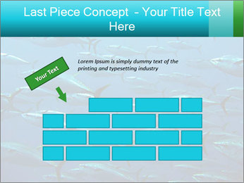 Group of giant tuna PowerPoint Template - Slide 46