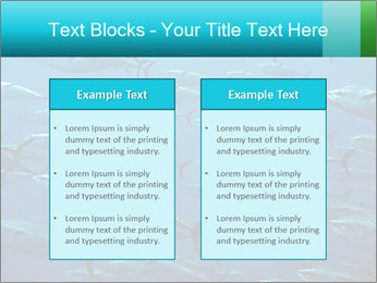 Group of giant tuna PowerPoint Template - Slide 57