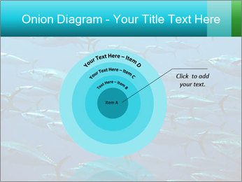 Group of giant tuna PowerPoint Template - Slide 61