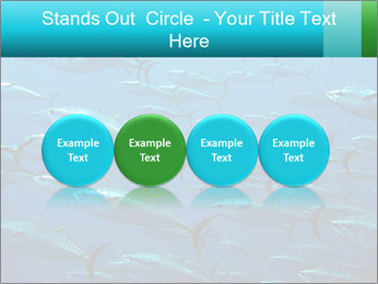 Group of giant tuna PowerPoint Template - Slide 76