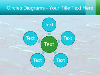 Group of giant tuna PowerPoint Template - Slide 78