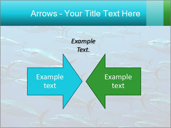 Group of giant tuna PowerPoint Template - Slide 90
