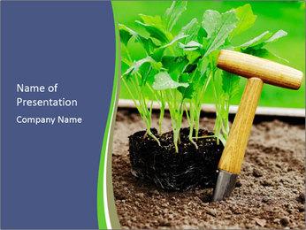 Turnip cabbage PowerPoint Template - Slide 1