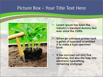 Turnip cabbage PowerPoint Template - Slide 13