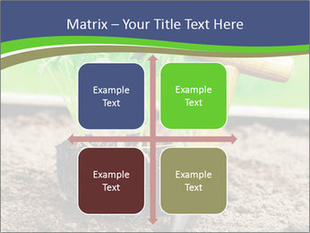 Turnip cabbage PowerPoint Template - Slide 37
