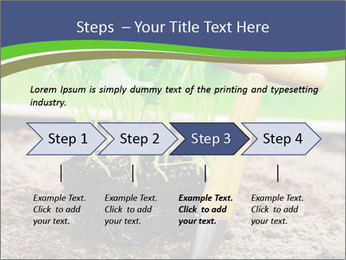 Turnip cabbage PowerPoint Template - Slide 4