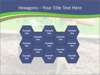 Turnip cabbage PowerPoint Template - Slide 44