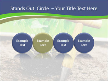 Turnip cabbage PowerPoint Template - Slide 76