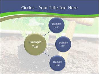 Turnip cabbage PowerPoint Template - Slide 79