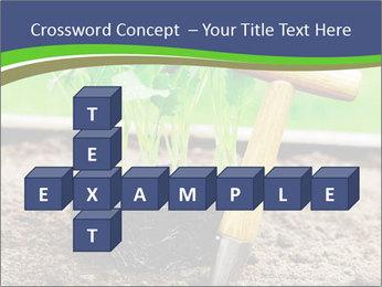 Turnip cabbage PowerPoint Template - Slide 82