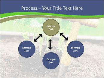 Turnip cabbage PowerPoint Template - Slide 91