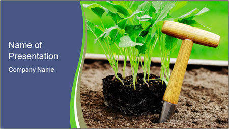 Turnip cabbage PowerPoint Template