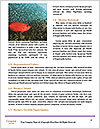 0000092472 Word Templates - Page 4