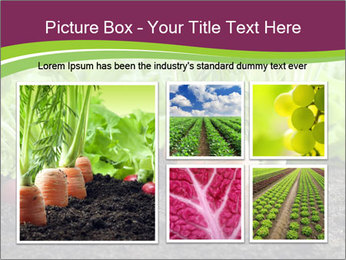 Vegetables PowerPoint Template - Slide 19