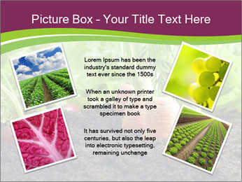 Vegetables PowerPoint Template - Slide 24