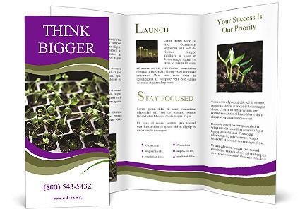 0000092492 Brochure Template
