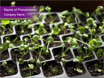Tomatoes in soil PowerPoint Template - Slide 1