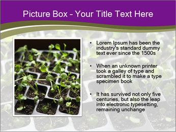 Tomatoes in soil PowerPoint Template - Slide 13