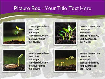 Tomatoes in soil PowerPoint Template - Slide 14