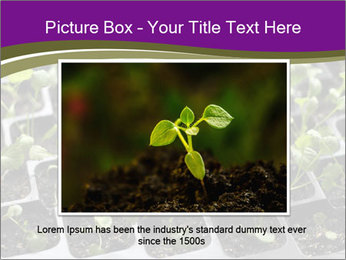 Tomatoes in soil PowerPoint Template - Slide 15