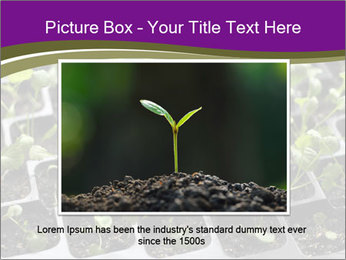 Tomatoes in soil PowerPoint Template - Slide 16