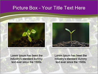 Tomatoes in soil PowerPoint Template - Slide 18