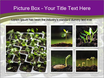 Tomatoes in soil PowerPoint Template - Slide 19