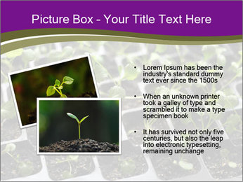 Tomatoes in soil PowerPoint Template - Slide 20