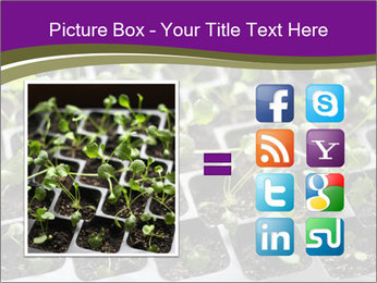 Tomatoes in soil PowerPoint Template - Slide 21
