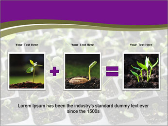 Tomatoes in soil PowerPoint Template - Slide 22