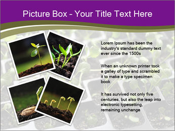 Tomatoes in soil PowerPoint Template - Slide 23