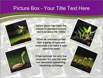 Tomatoes in soil PowerPoint Template - Slide 24
