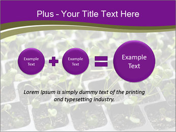 Tomatoes in soil PowerPoint Template - Slide 75